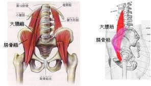 腸腰筋 図